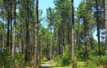 Forêt Vielle-Saint-Girons